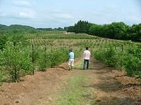 広大なブルーベリー畑