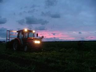 だだちゃ豆の収穫は夜明け前