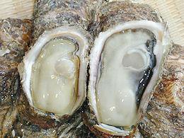 天然岩牡蠣(イワガキ)を開けて中身を持ち上げた写真