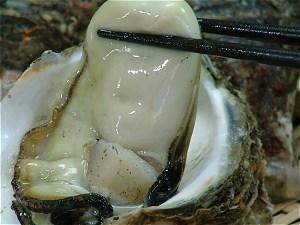 天然岩牡蠣をつまみ上げたところ