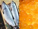 鮭粕漬け&いくら